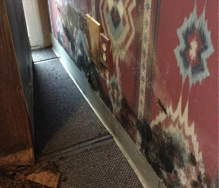 Mold Remediation in San Antonio Business Before